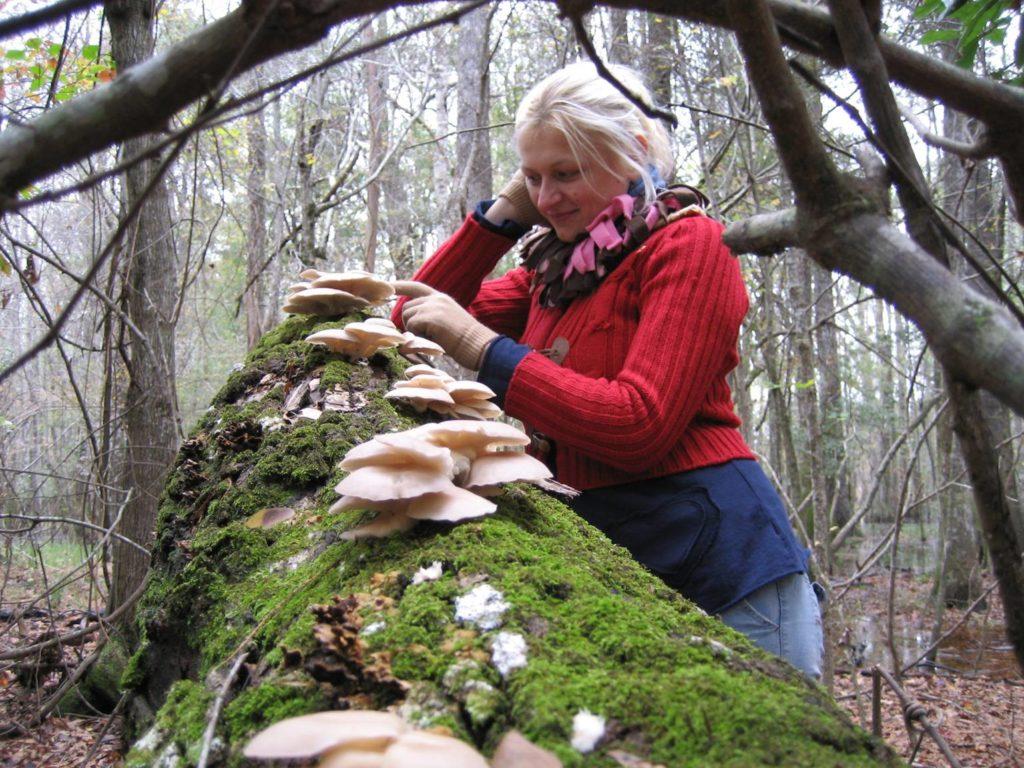 oyster fungi and olivia