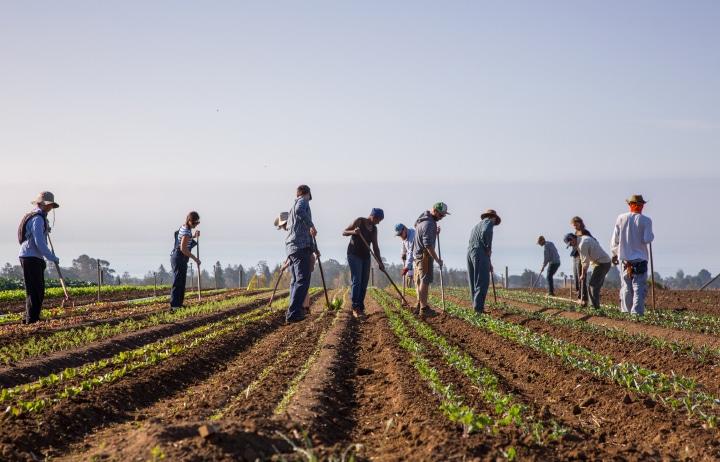 veteran farmers in field