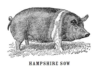striped sow