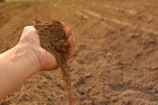 Humic Acid and How it Benefits Soil | EcoFarming Daily