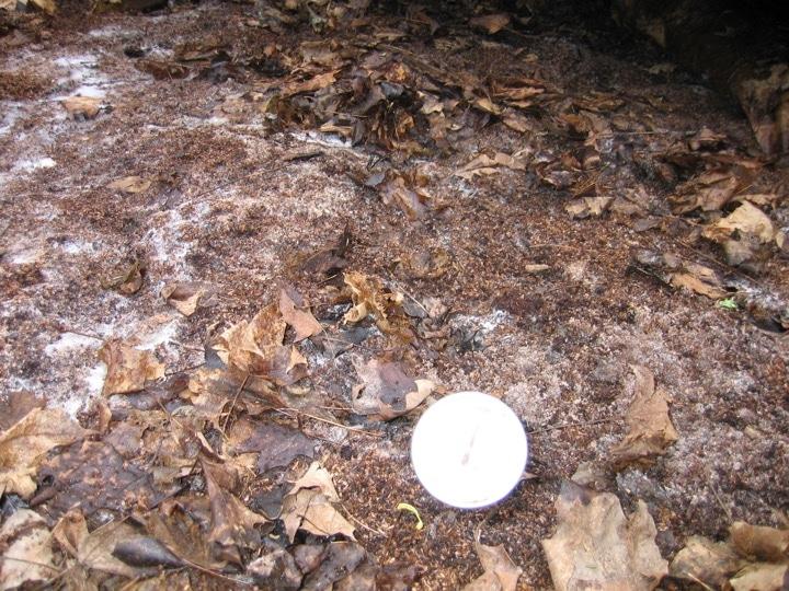 soil and bran pile