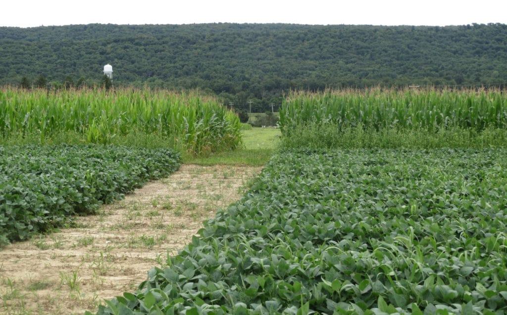 corn nitrogen comparison