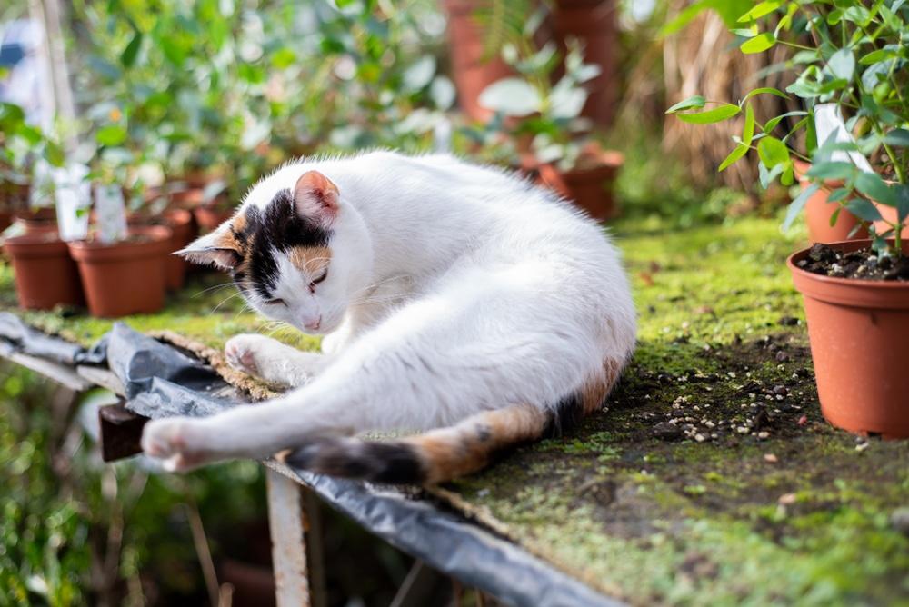Cat in a greenhouse