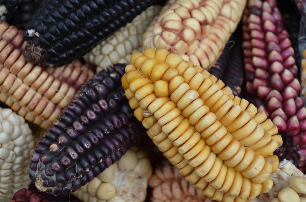 heritage corn