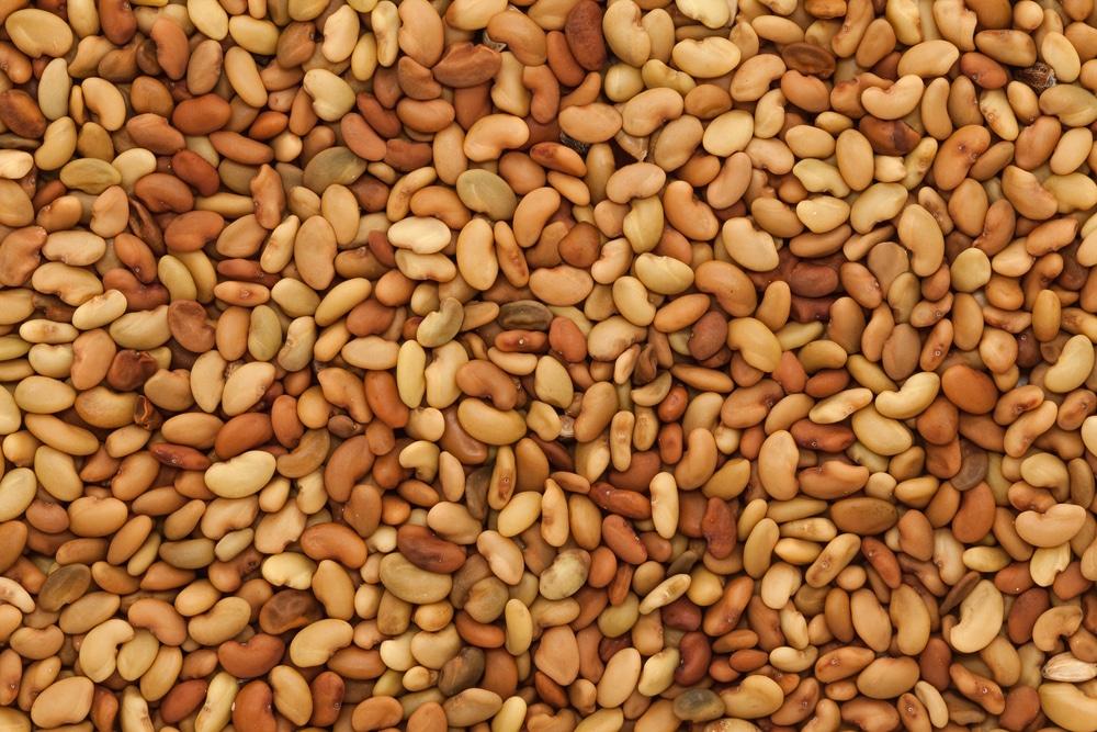 Alfalfa 101: Feeding Alfalfa Plants, Alfalfa Soil Types and Seeding Alfalfa