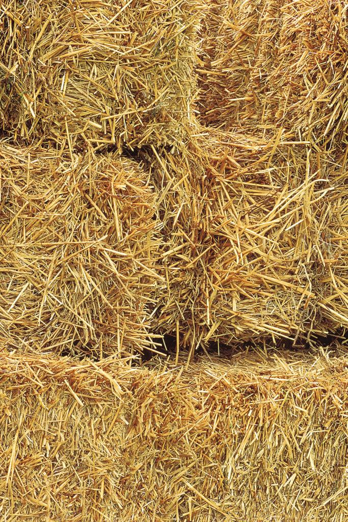 soybean hay