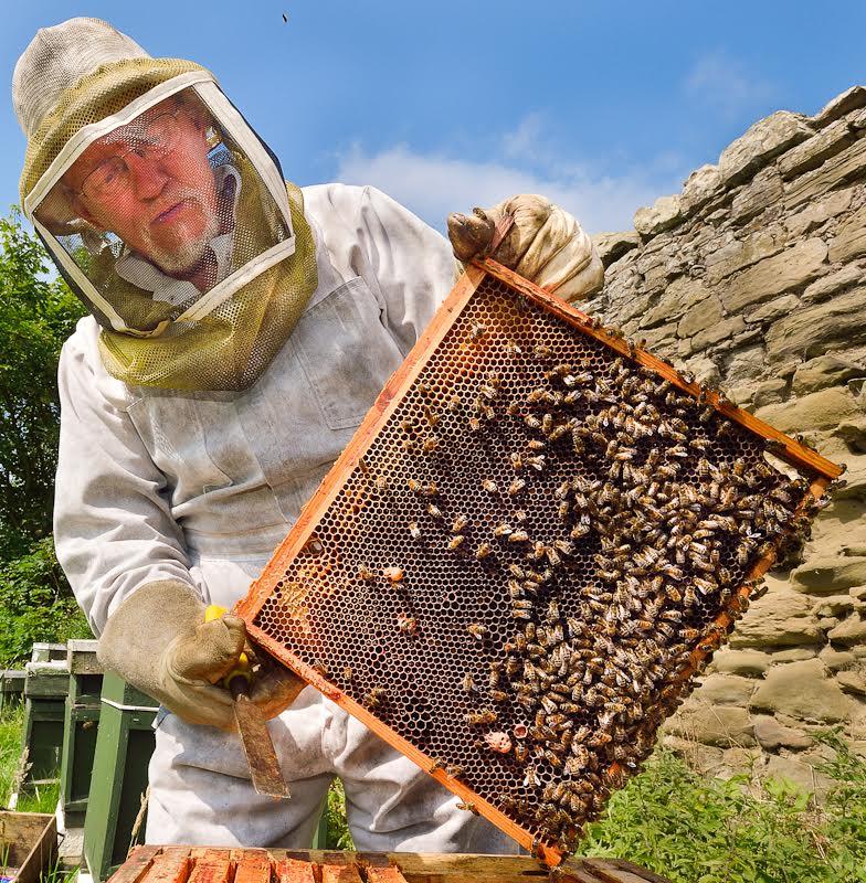 Pollinators in Peril | EcoFarming Daily